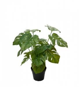 Bilde av Mr. Plant - Monstera 30 cm